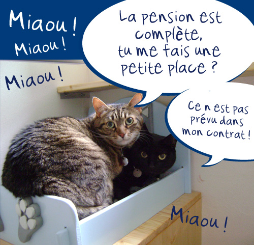 h tel le chat bleu pension pour chats dans la r gion de mulhouse en alsace. Black Bedroom Furniture Sets. Home Design Ideas